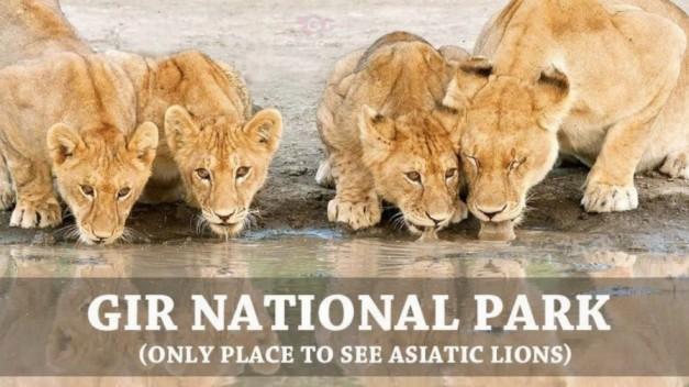 Gir National Park | Wildlife Sanctuary in Gujarat | Gir Forest